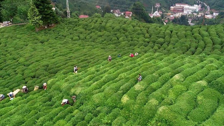 Türkiye, çay ihracatından 4 ayda 6,5 milyon dolar kazandı