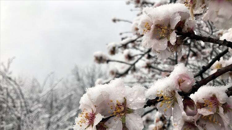 Meteoroloji'den 5 il için zirai don uyarısı