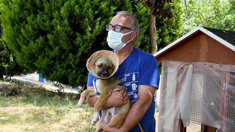 Kulakları jiletle kesilen yavru köpek sağlığına kavuştu