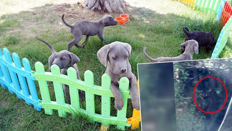 Konya'da köpeklerine eziyet eden kadın gözaltına alındı