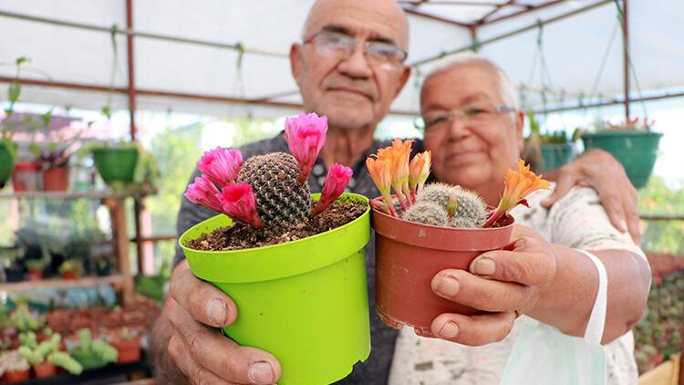 Meme kanserine yakalanan eşi için 1200 kaktüslü hobi bahçesi kurdu