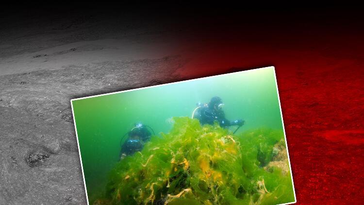 Marmara'daki deniz salyası tehlikesi görüntülendi
