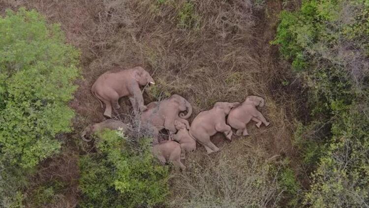 Gözünüzden kaçmış olabilir | Tüm ülke bu fillere kitlendi! Türkiye'den karavan hikayeleri... Sütte yeni tehlike: Çamaşır suyu…