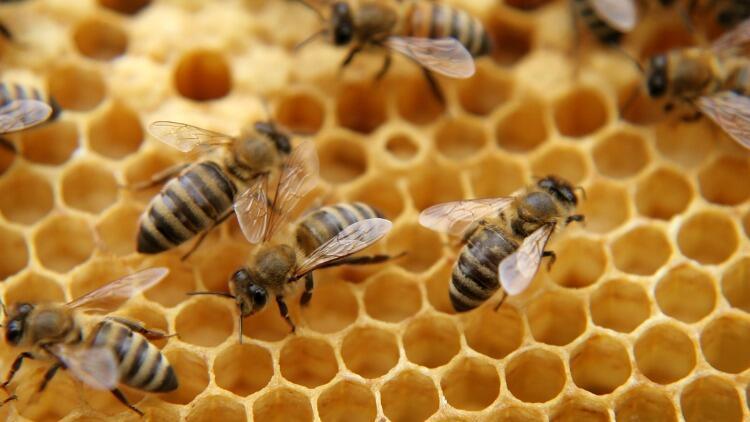Arı zehrinin cilt üzerine etkisi