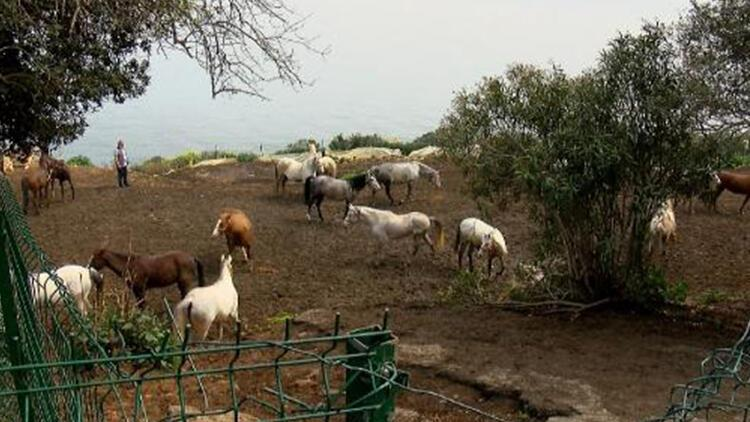 Kayıp atları, İnsan Kaynakları ve Eğitim Müdürlüğü talep etmiş