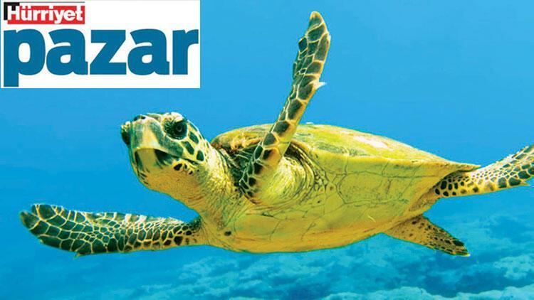 Marmara Denizi de nadir canlıları da tehlikede