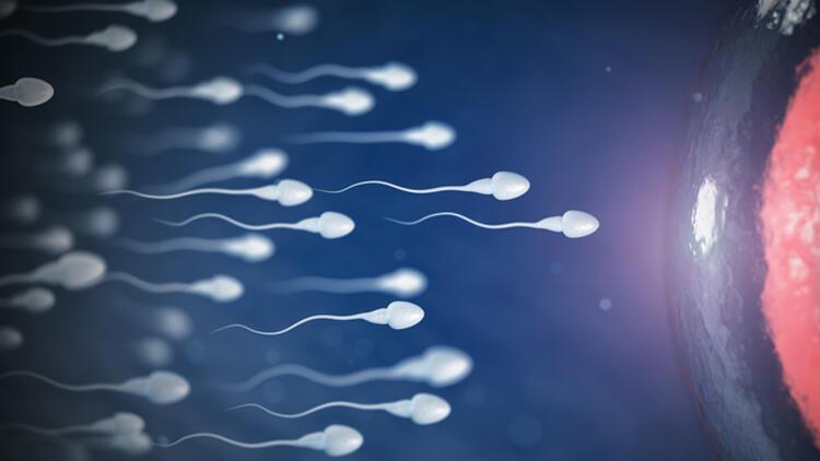 Sperm tahlilinde hareketin değerlendirilmesi