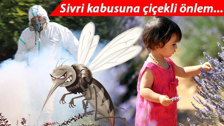 İstanbul sivrilerin buluşma noktası oldu! İşte sivrisinekten korunma kılavuzu...