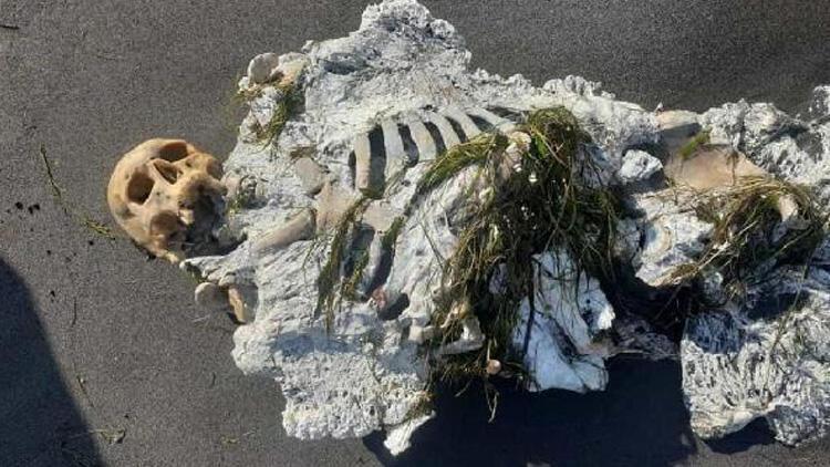 Samsun'da sahilde yürüyüş yapanlar fark etti! İskelet kıyıya vurdu