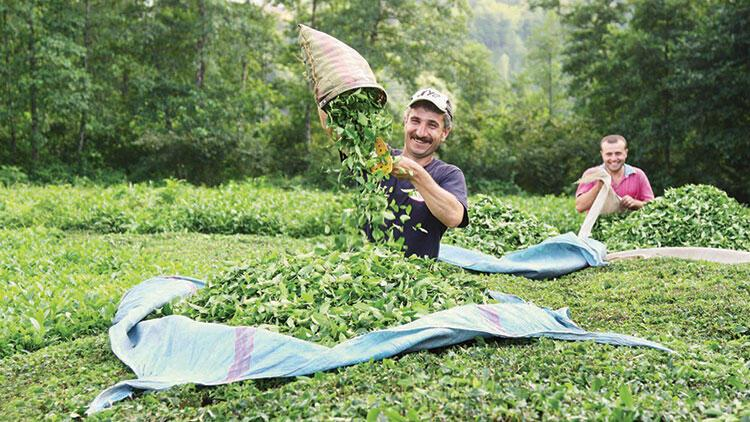 Türk çayı yeni ürünlerle yeni pazarlara açılacak