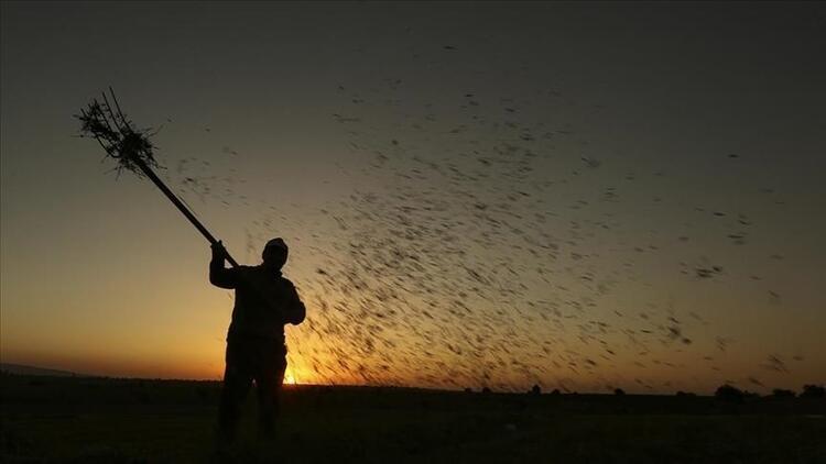 Çiftçilere 600 milyon liralık faizsiz kredi verildi