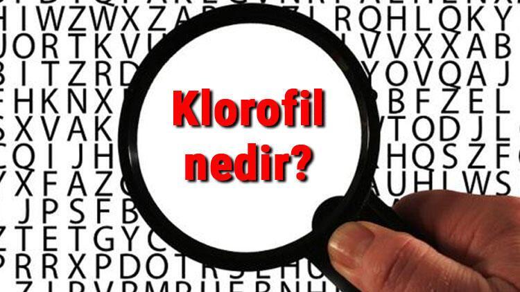 Klorofil nedir, ne işe yarar ve nerede bulunur? Klorofil pigmenti ve görevleri