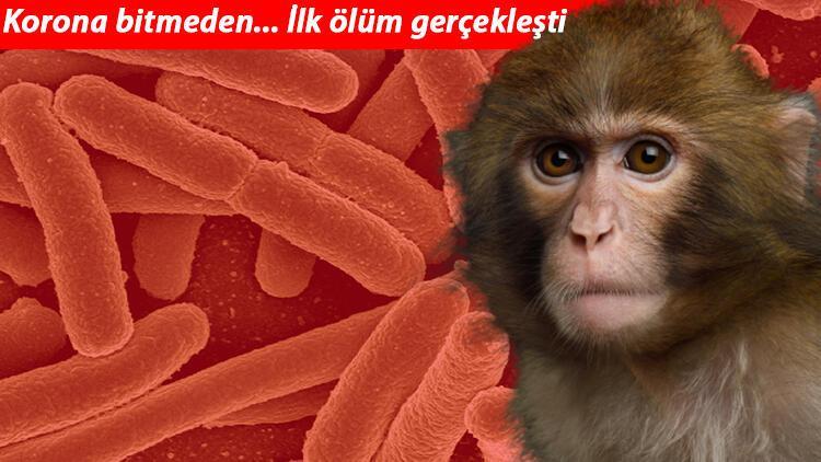 Son dakika haberi: Koronadan sonra yeni kâbus! Monkey B virüsü: Çin'de görüldü, ilk ölüm haberi geldi!