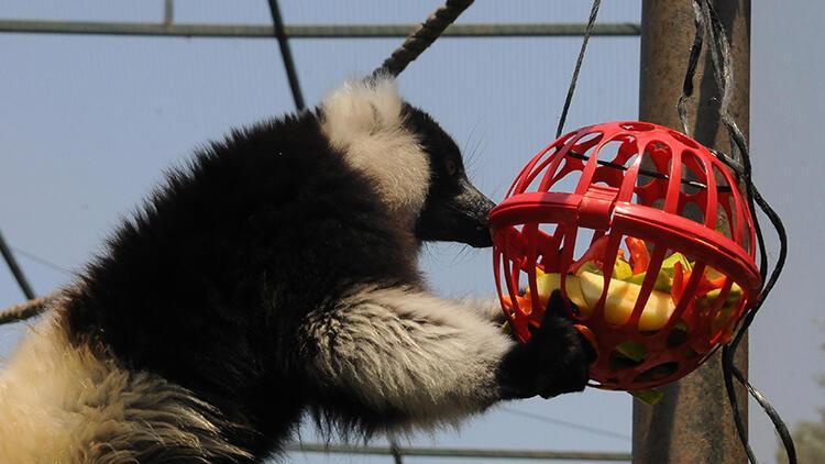 Kocaeli'de sıcaktan bunalan hayvanlara buzlu meyvelerle serinlik