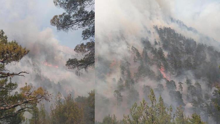 Son dakika... Kayserinin Yahyalı ilçesinde orman yangını