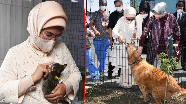Emine Erdoğan: Hayvanlara yönelik suçlar oluşmadan çözüm üretmeliyiz