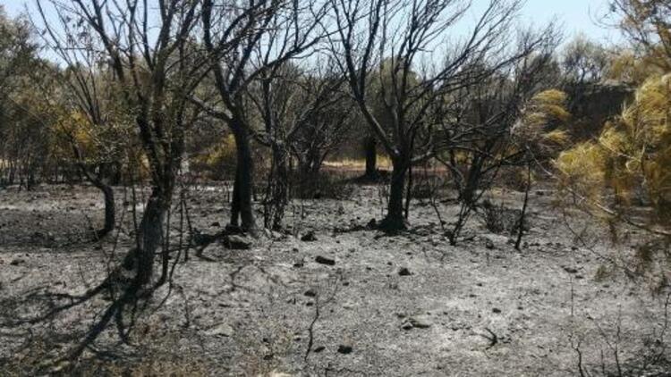 Datçada çıkan orman yangınında 1 hektarlık alan zarar gördü