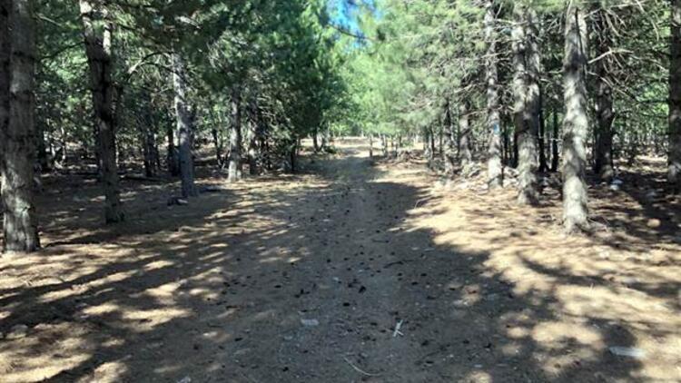 Hatayda ormanlara giriş 31 Ekime kadar yasaklandı