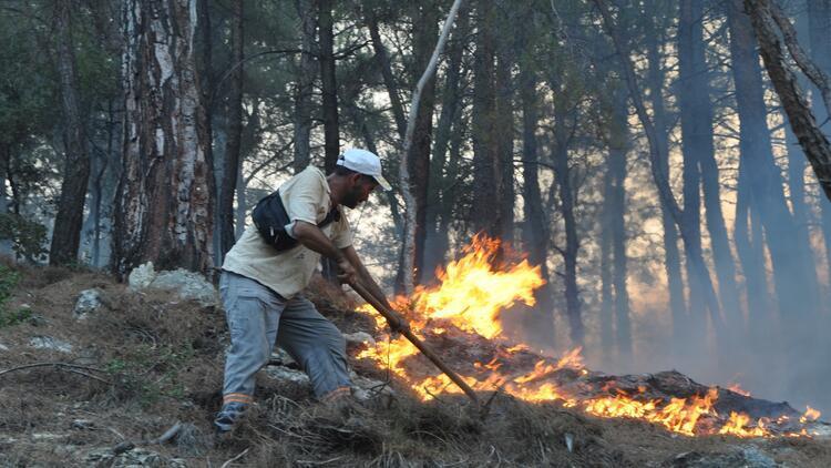 Üniversiteler yanan ormanlar için fidan bağışlıyor