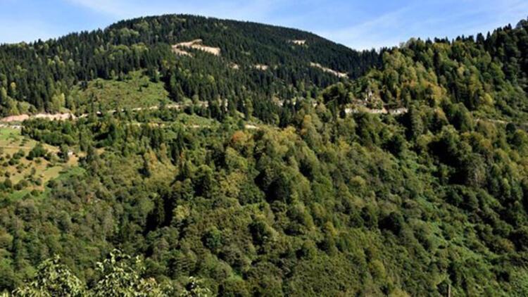 Trabzonda bazı ormanlara giriş ve belirli alanlar dışında ateş yakılması yasaklandı