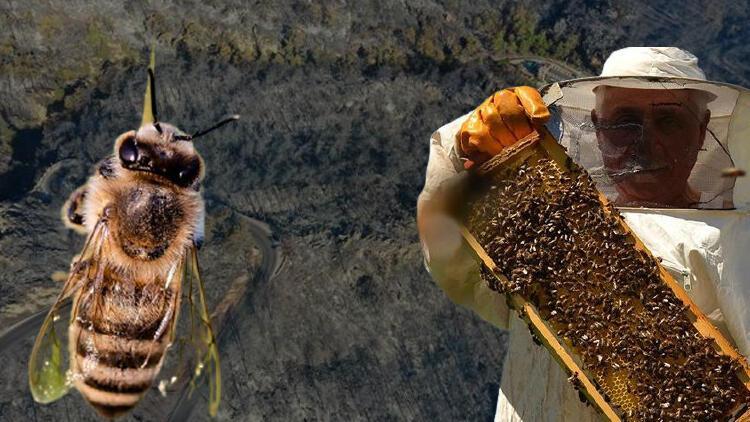 Önce kuraklık şimdi yangın... Arılar kurtuldu, çam balı üretimi ne olacak