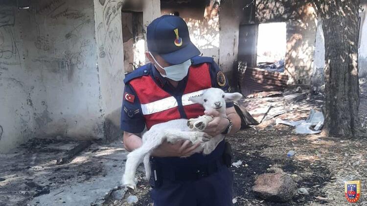 2 bin 310 jandarmadan yangınla mücadeleye destek