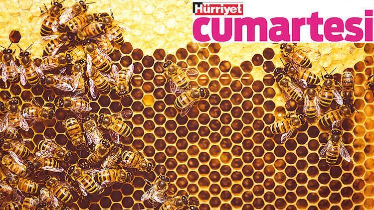 Arıların şifalı gücü