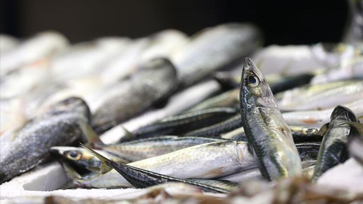 Balık fiyatlarının düşmesi için deniz suyunun soğumasını bekleniyor