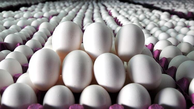 Tavuk yumurtası üretimi yüzde 0,8 arttı