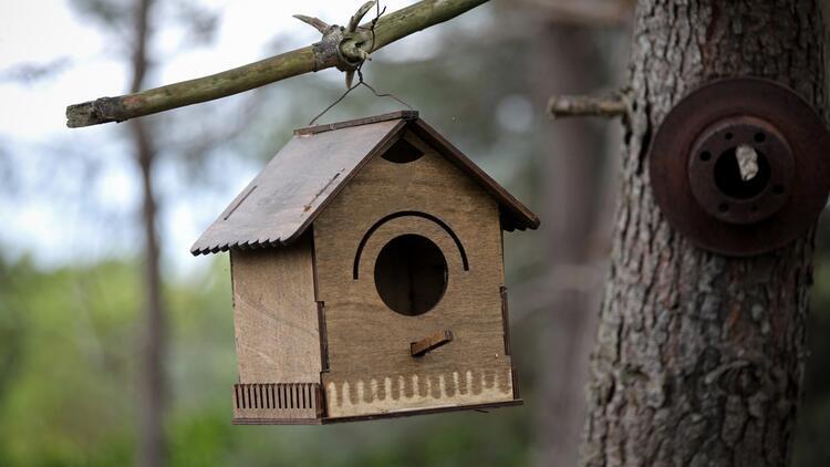 Kuş evi yapımı