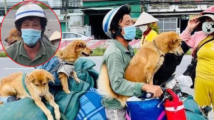Dünya ayağa kalktı Sahipleri Kovid-19a yakalanan köpekleri böyle katlettiler