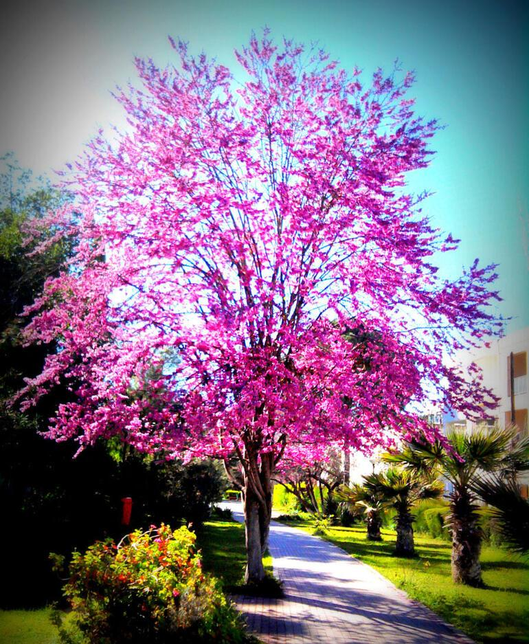 Şehirlerin tanınması gereken 10 ağacı