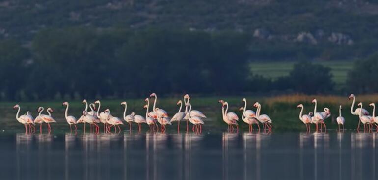 Flamingoların bir gölü daha kurudu