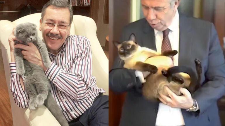 Kedim Sekter'den siyasilerin kedilerine dair hunharca analizler