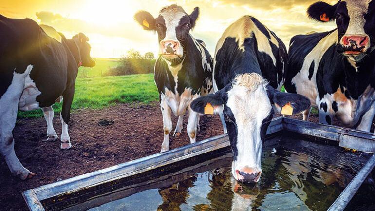 Tarım ve hayvancılığa kredi dopingi
