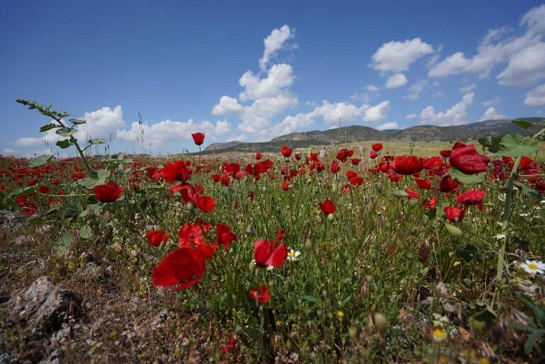 Hierapolis Antik Kentinde çiçeklerle görsel şölen