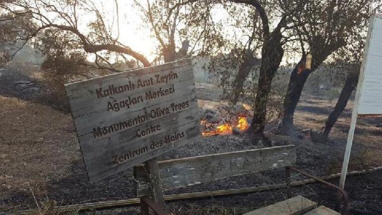 KKTCdeki yangın kontrol altına alındı... 800 yıllık ağaçlar yandı