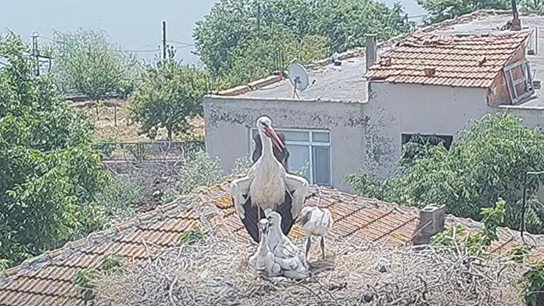 Yaren leylek, yavrularıyla fotoğraflandı