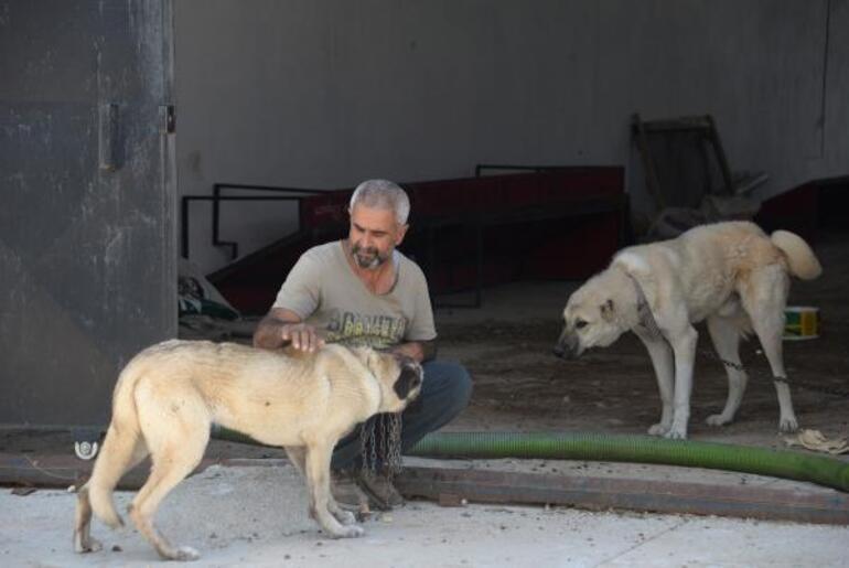 Bunun adı vahşet! Hırsızlık için 8 köpeği zehirlediler - Son Dakika Haberler