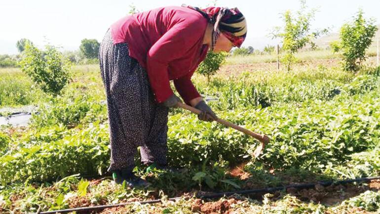 Bir tohum toprağa, bir tohum gönüllere... Organik tarım hayatlarını değiştirdi