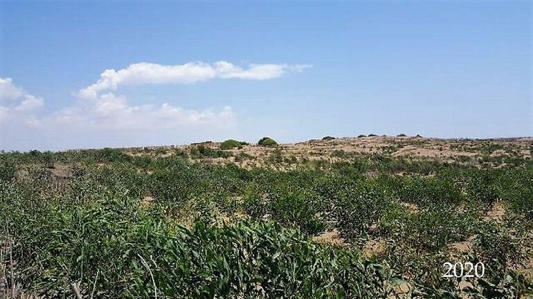 Ağyatan Lagününün çöl olması engellendi