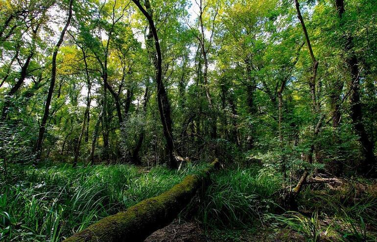 Samsunda mutlaka görülmesi gereken 9 doğa harikası