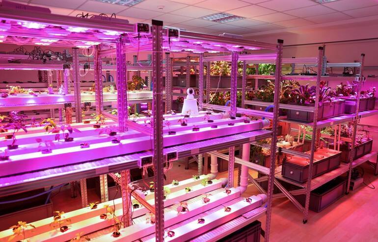 Rektör ve öğrencisi ortak olup yeni nesil bitki tesisi kurdu