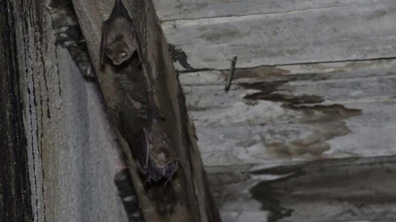 Çatıya yuva yaptılar... Binadakileri korku sardı