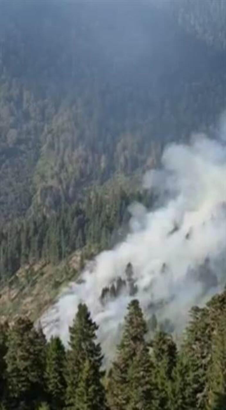 Son dakika ... Gümüşhane Örümcek Ormanı'nda Yangın