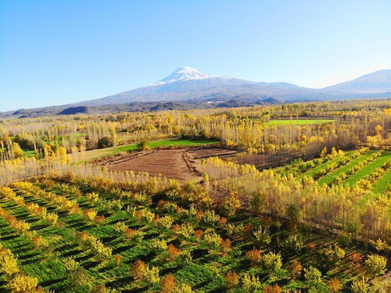 Iğdırın kayısı bahçelerinde tablo gibi sonbahar görüntüleri