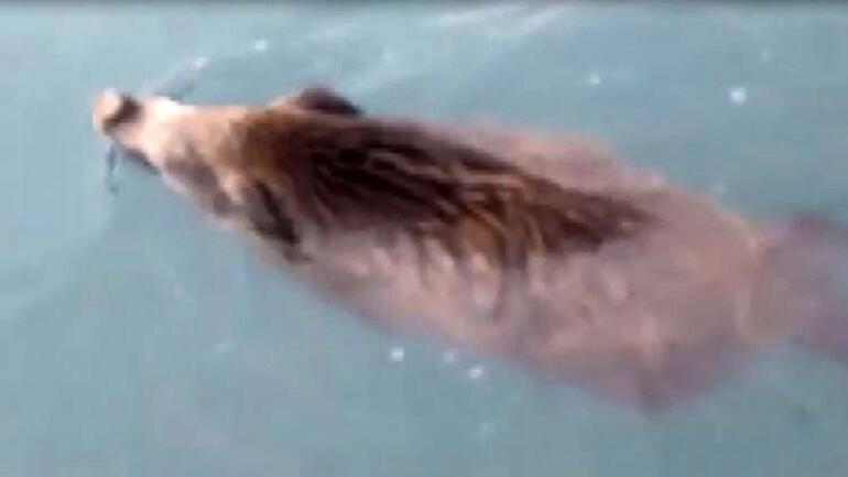 Van Gölü canavarı sandılar... Gerçek çok farklı çıktı