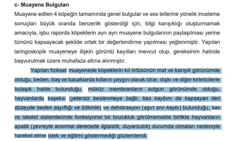 Son dakika haberler...  İşte Ankaradaki köpek vahşetinin raporu: Ses telleri dağlanmış