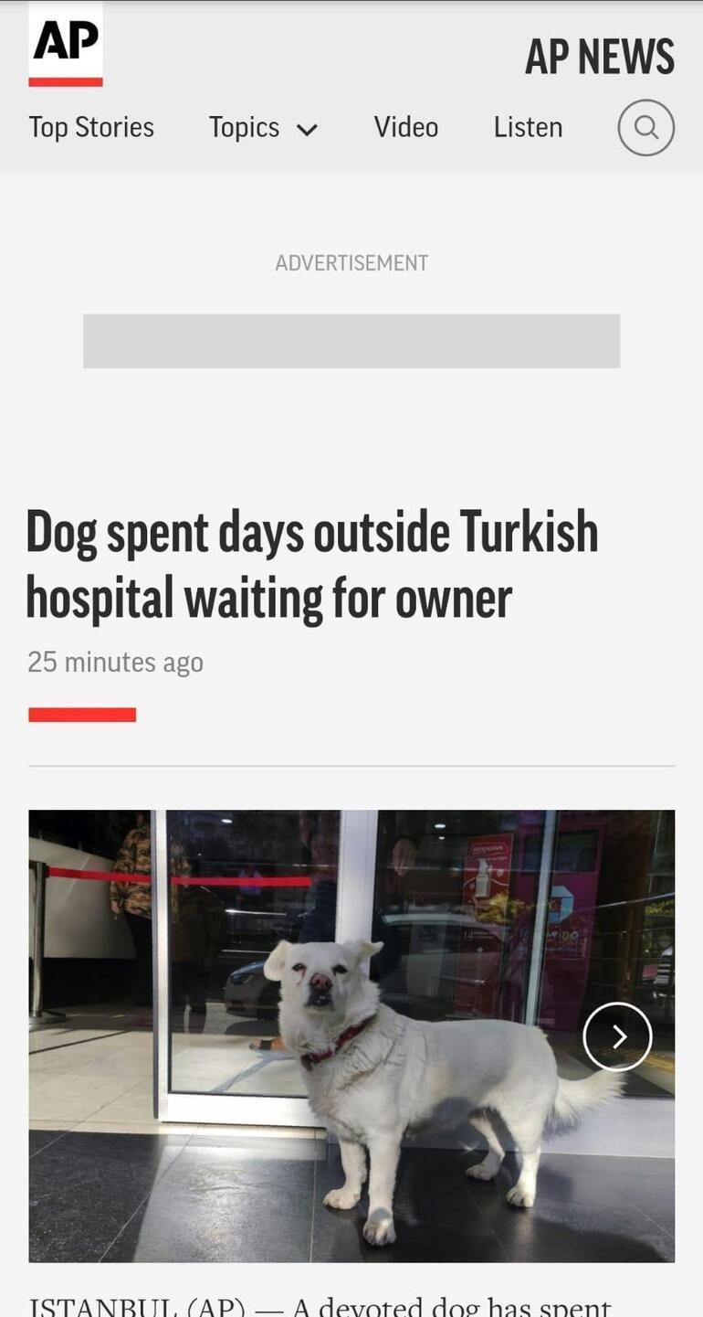 Sahibini günlerce hastane kapısında beklemişti... Boncuk dünya basınında