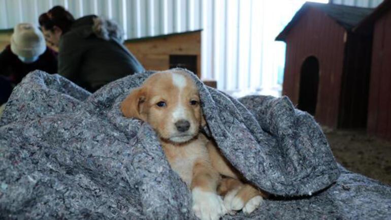 Can Evindeki sokak köpeklerini, soğuktan battaniyeye sararak koruyorlar
